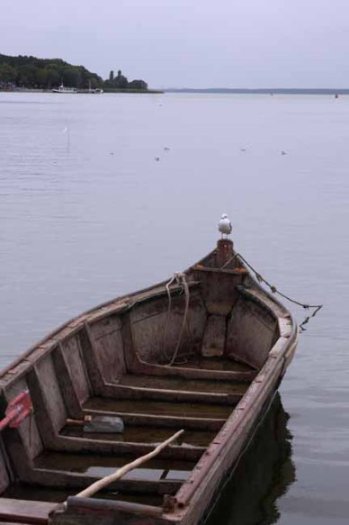 Seagull on a rowboat in the Curonian Lagoon