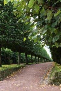 Allee of shaped treesphoto by Morgan Thomas