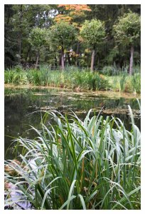 Pond with grasses on the Peterhof complex.photo by Morgan Thomas